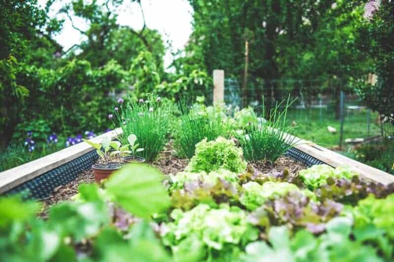 off grid veggie garden